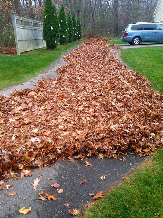 ornamental pruning aeration and over-seeding fall cleanups parking lot sweeping all phases of snow and ice management